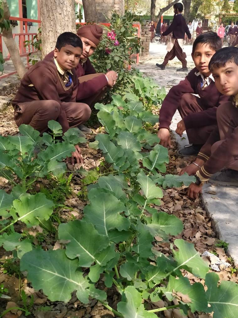 In Punjab district, signs of green shoots: Organic vegetable gardens in schools