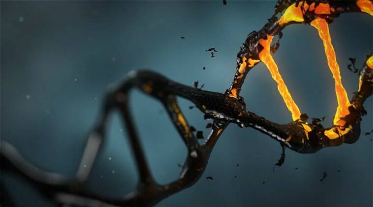 Scientists find mysterious 'ghost' ancestry in West African DNA - The Indian Express