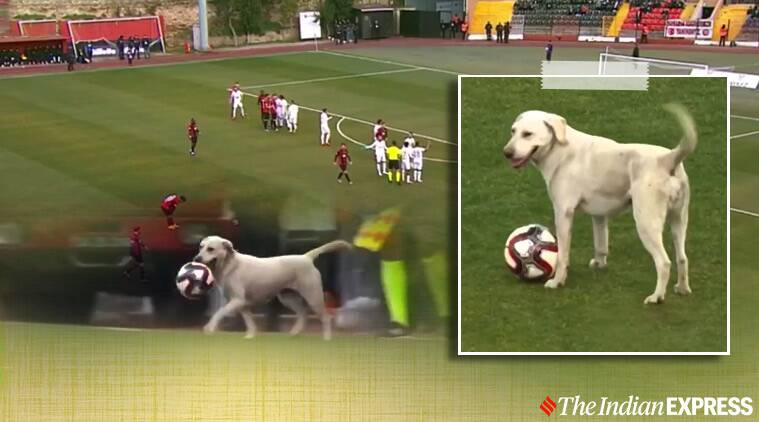Stray dog invades football pitch during match in Turkey, video goes viral