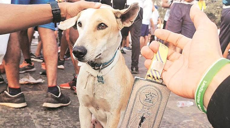 Meet the Worli stray dog that gets lost (and found) every marathon