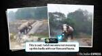 This video of an elephant climbing a narrow flight of staircase is going viral