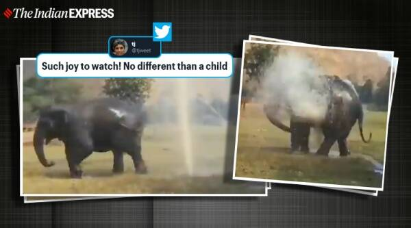 Elephant playing with water, Elephant calf playing with water sprinkler, Elephant videos, Viral video, Trending, Indian Express news.