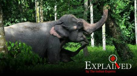 Explained: How India proposals at UN event can help elephants, migratory birds