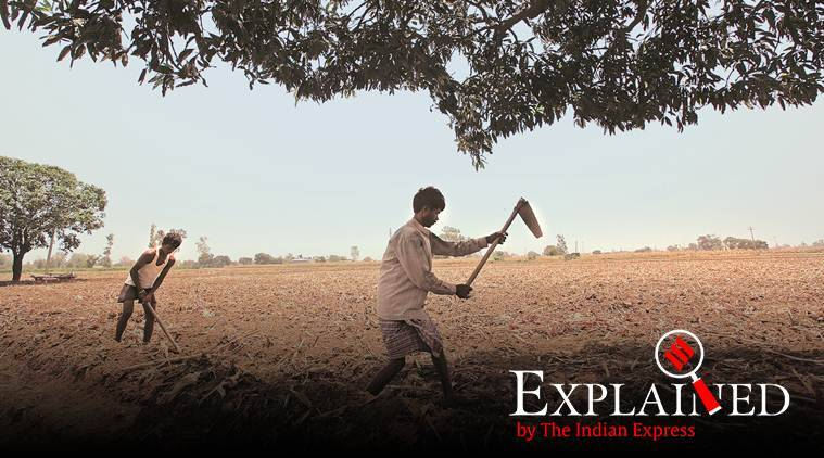punjab farmers, punjab loan waiver, punjab landless farmers, punjab news, indian express news