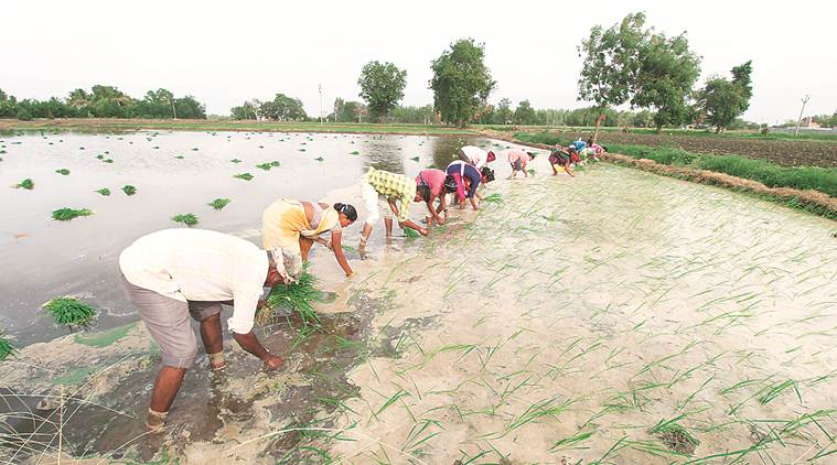 40 lakh farmers given Rs. 800 crore under PM Kisan Yojana, says Govt