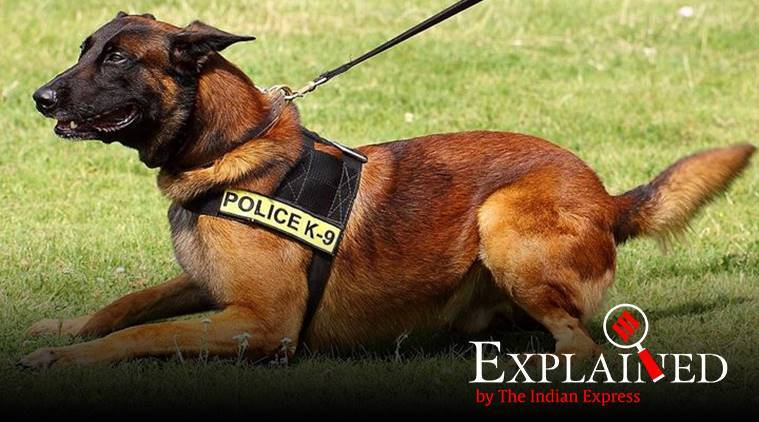 dog that tracked osama bin laden, kolkata police, Belgian Malinois, police dogs in india, how dogs help police, indian express, express explained