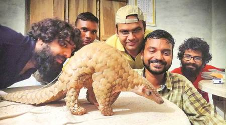 In a first, Madhya Pradesh radio-tags rescued pangolins