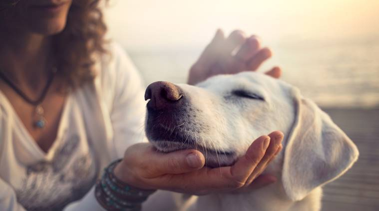 pet care, pet care tips, teething issues in pets, pet care indian express