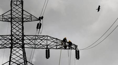 Experts concerned about risks posed by power lines to birds