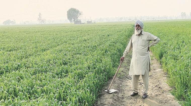 MSP money directly to Punjab and Haryana farmers account के लिए इमेज नतीजे