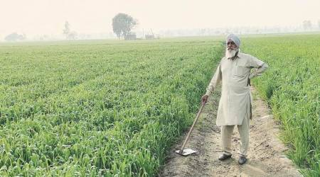 Haryana interest-free loans to farmers, interest-free loans to Haryana farmers, Haryana farmers, India news, Indian Express