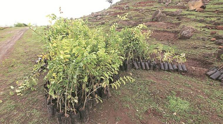In Punjab, 19,000 van mitras to make sure 73 lakh saplings survive