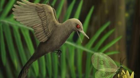Oculudentavis khaungraae, bird dinosaur, tiny dinosaur, dinosaur dna, dinosaur skull in amber, jurassic park