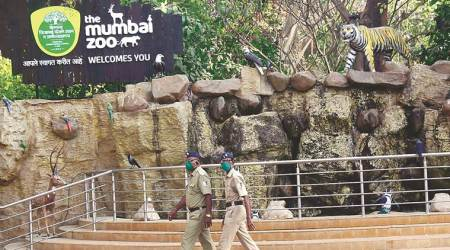Mumbai Zoo: Lockdown leads to change in diet of many carnivores