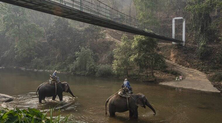 As tourism plummets in Thailand, elephants are out of work, too