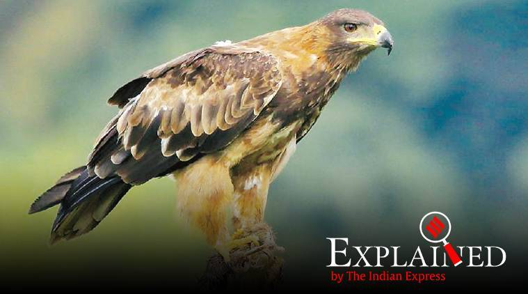 Telling Numbers: Many birds on decline in India, a few species found thriving