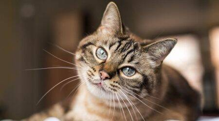 A cat on a ship is now at the centre of coronavirus scare in Chennai