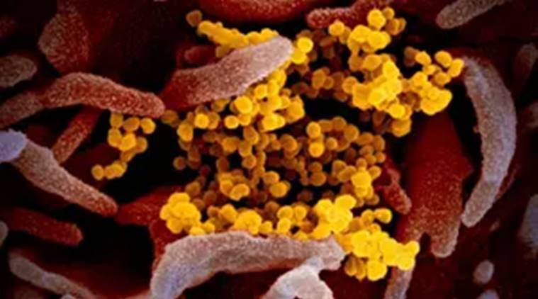 Indian scientists mobilise to counter myths surrounding coronavirus