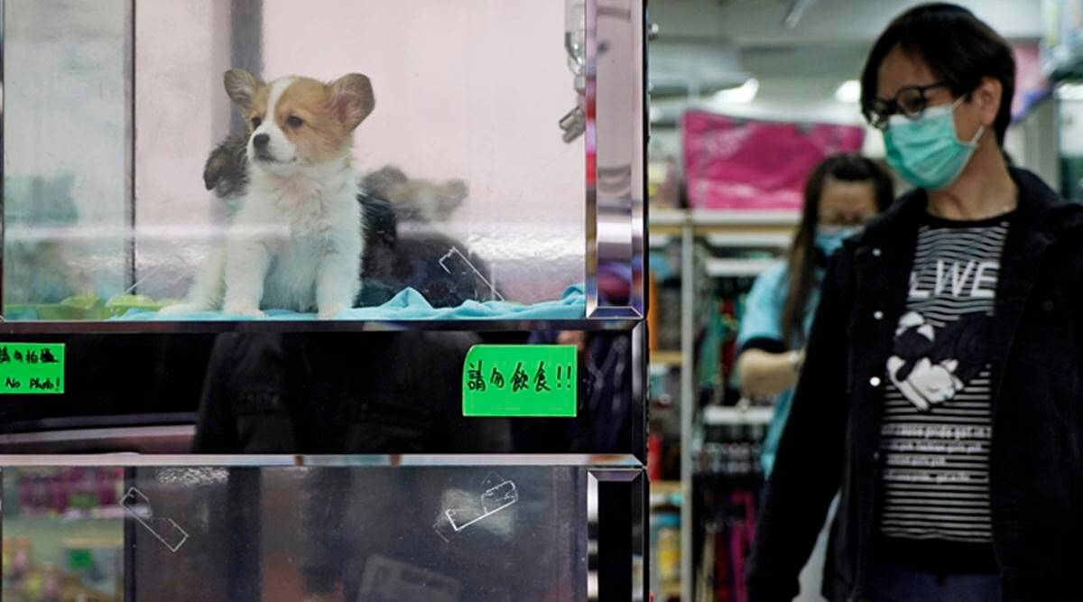 4,000 dogs, cats, rabbits bought online found dead in China