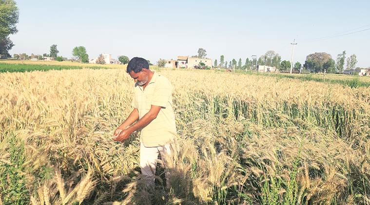 Coronavirus lockdown: Crop ready, states look for farm hands