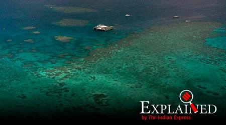 Explained: What causes coral bleaching at the Great Barrier Reef?