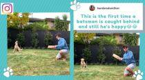Netizens thrilled as Kane Williamson's dog pulls off classy slip catch during self-isolation