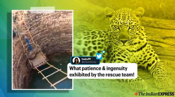 leopard rescue, madhya pradesh leopard rescue from well, leopard fell in well rescued, rescuers use khatiya for animal rescue, viral videos, indian express
