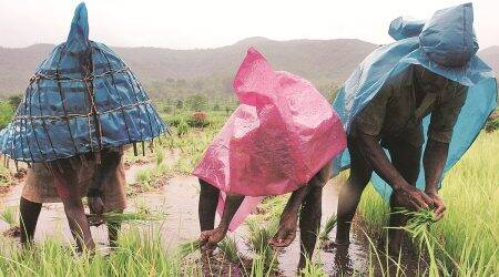Maharashtra farmers, crop insurance, Pune news, Maharashtra news, Indian express news