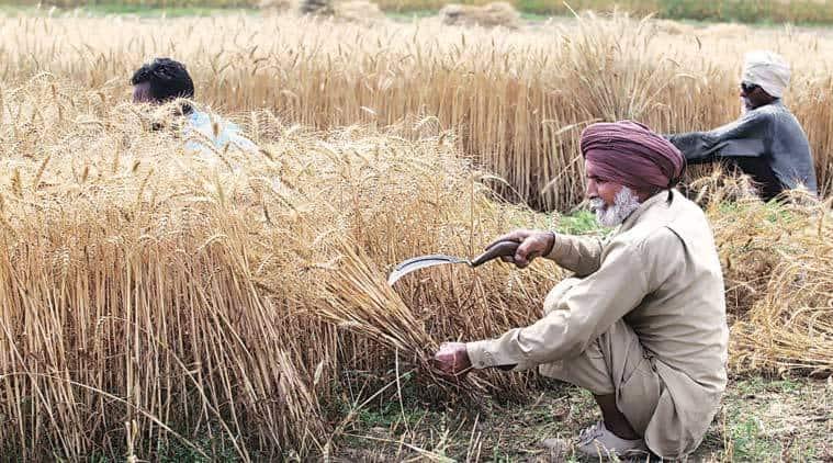 Haryana, haryana rains, haryana crop damage, haryana crop damage compensation, haryana news, india news, indian express
