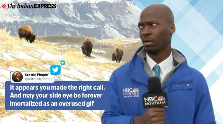reporter bison video, yellowstone national park, reporter reaction herd of bison, bison herd approaching reporter, Deion Broxton, Deion Broxton bison video, reporting tv bloopers, live reporting, indian express