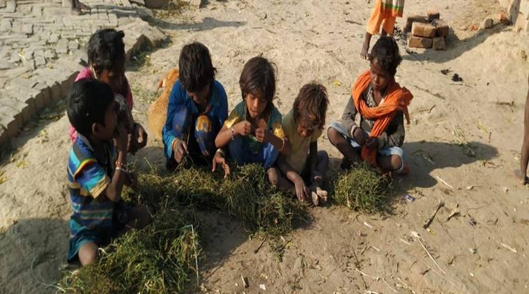 Hunger tales: Varanasi village kids seen eating plants, officials rush to help
