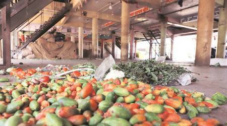 Vegetable farmers suffer losses, forced to leave produce to rot