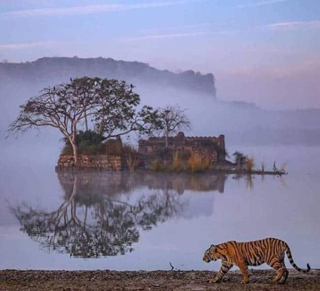 world wildlife day, wildlife santuary, national park