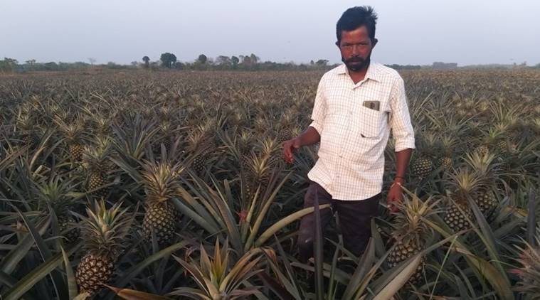 For India's distressed farmers, a little bit of help on Twitter