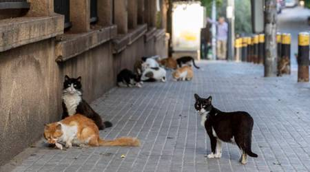 Cats with no symptoms spread virus to other cats in lab test