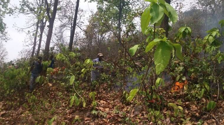 Susunia Hills, Susunia Hills forest fire, forest fires, bengal news, indian express