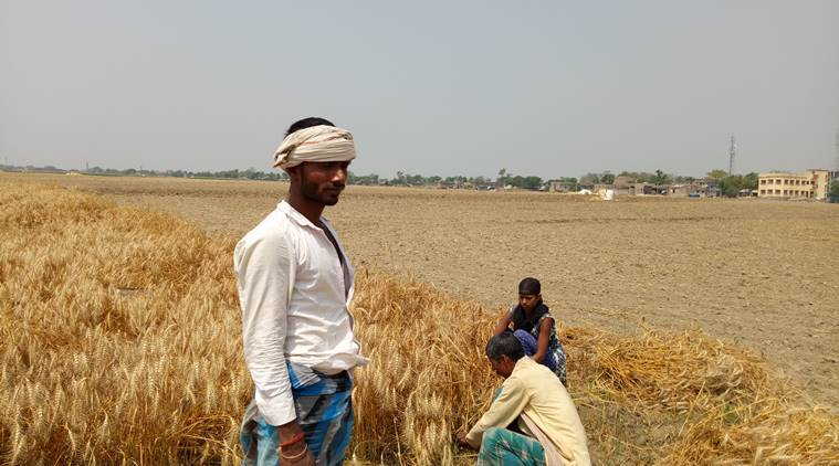 Loan waiver, Maharashtra farmers, farmers crisis, Maharashtra news, indian express news
