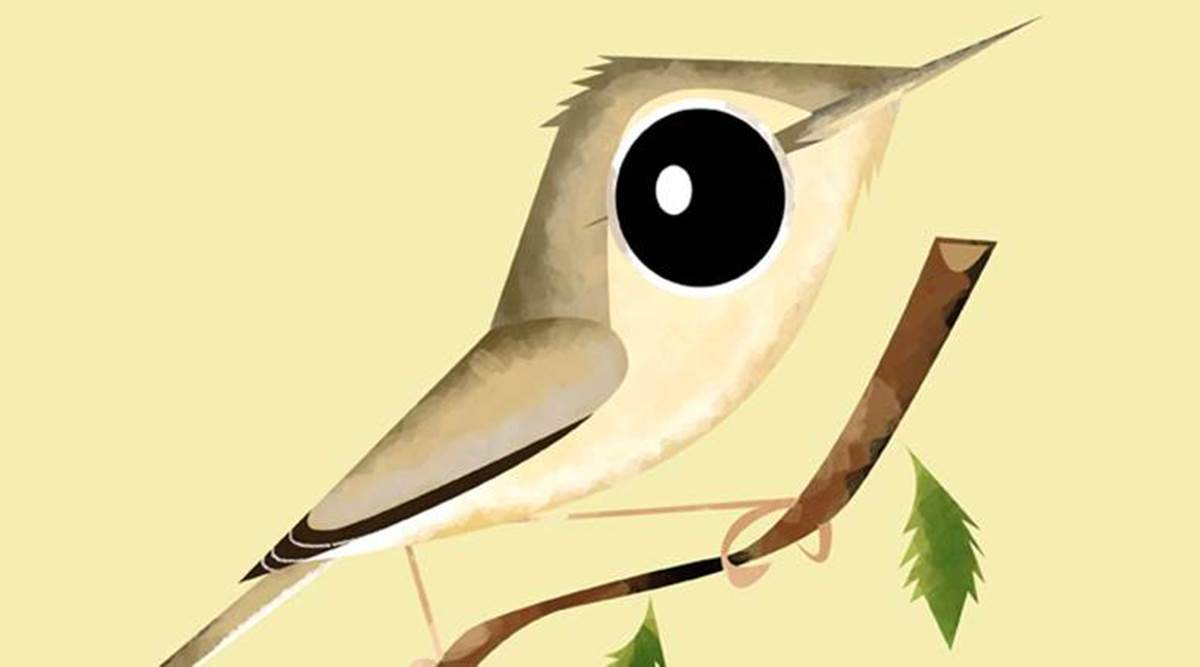 Bird Eye View How Many Of These Birds Have You Spotted Lifestyle News The Indian Express