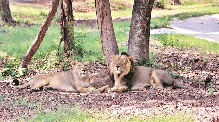 Chandigarh: Chhatbir Zoo restricts human-animal interface