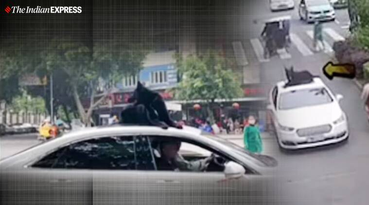 China, dog on car roof, dog standing on car roof, Sichuan, dog viral video, china lockdown, trending,