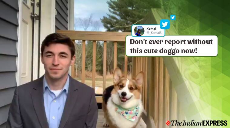 Watch: A dog's reaction during a weather report has made it an internet sensation