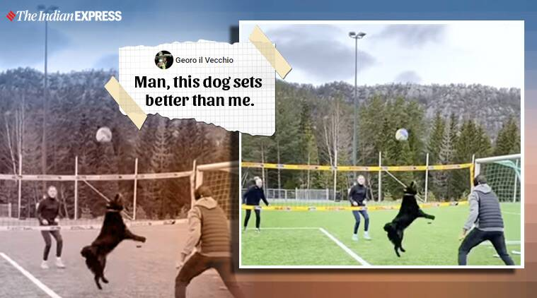 This dog is setting the internet on fire with her volleyball skills