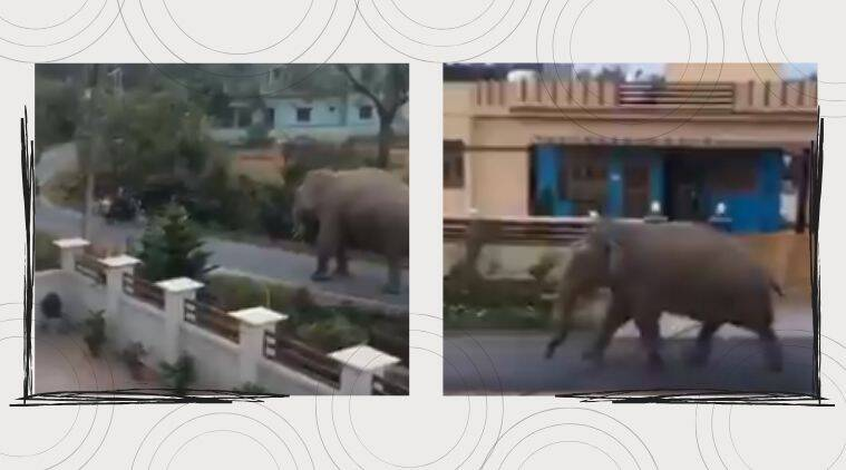 'Mammoth inspection': Elephant goes for morning walk in Dehradun suburbs, video goes viral