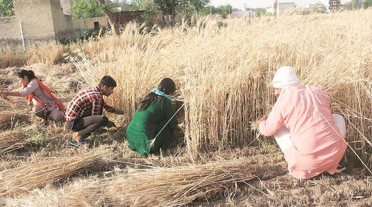 Haryana: Farmers seek gunny bags from government for storage, decision soon