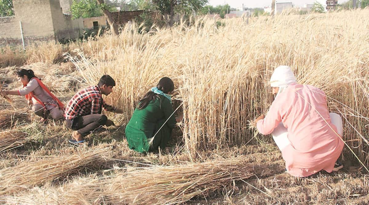 Haryana farmers, haryana news, haryana farmers protest, Centre's agri ordinances, indian express