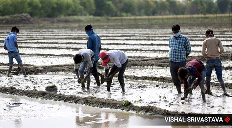 Rs 800 cr given to 40 lakh farmers under PM Kisan Yojana in Gujarat