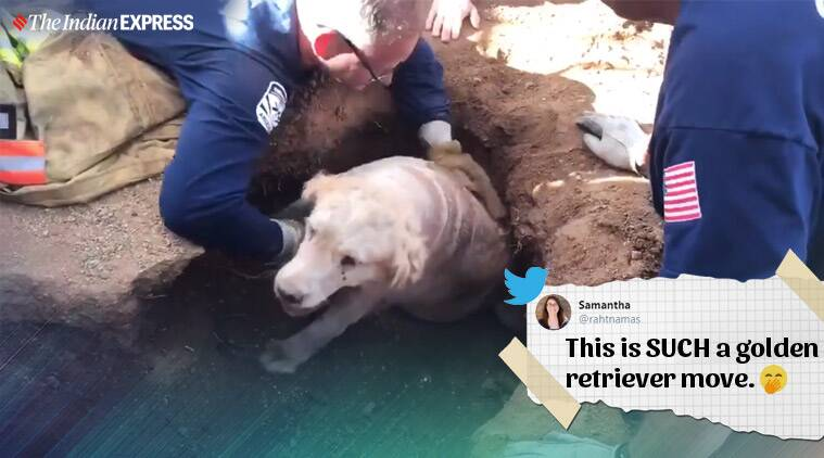 Scottsdale firefighters win praise after rescuing golden retriever that was stuck in hole