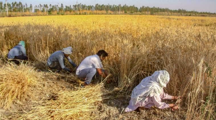 coronavirus, coronavirus latest updates, coronavirus Madhya Pradesh news, wheat procurement, coronavirus lockdown, indian express