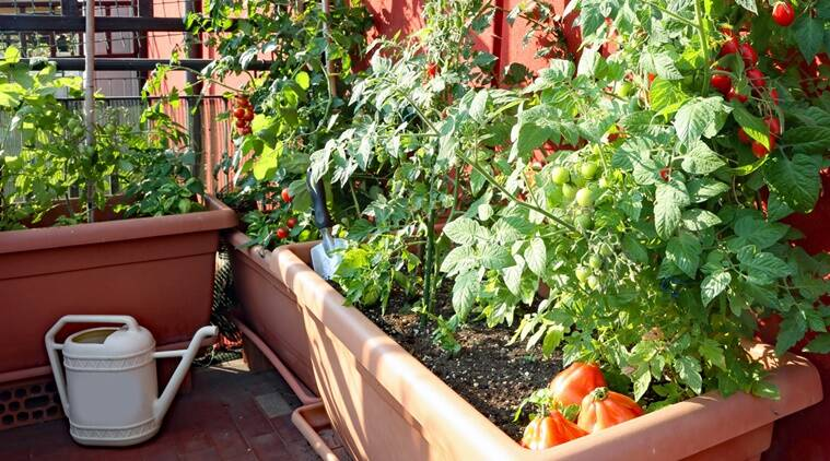 Simple ways to grow fresh and healthy food at home