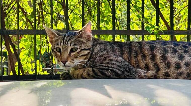 Coronavirus lockdown: Kerala HC allows cat owner to go out for pet food